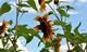Flora i fauna 6